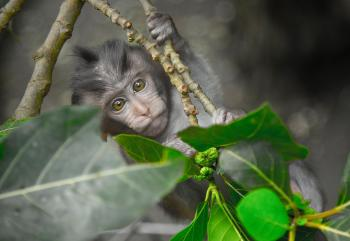 Gray Monkey Holding on Gray Tree Branch
