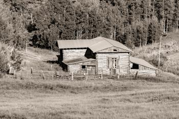 Gray Scale Photography of House Beside Trees