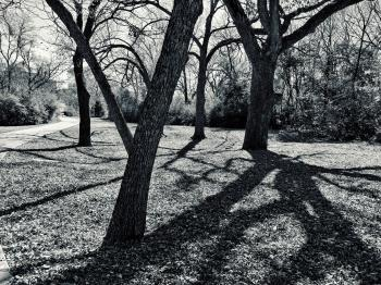 Grayscale Photo of Trees
