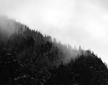 Grayscale Photo of Trees on Mountain