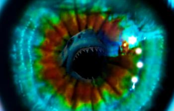 Great white shark attack eye reflection