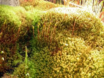Green and yellow moss