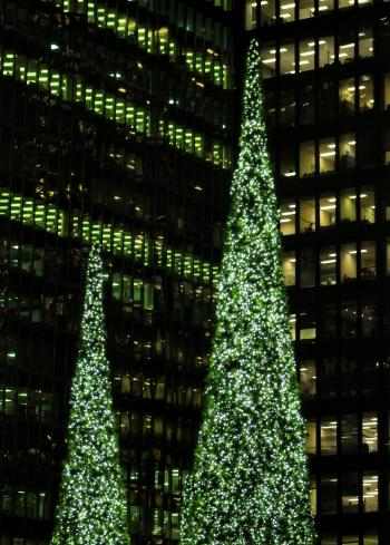 Green Christmas Trees Dwarfed by Buildings