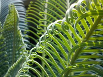 Green Curly Plant