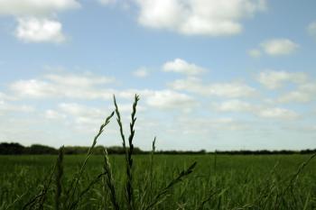 Green field focus