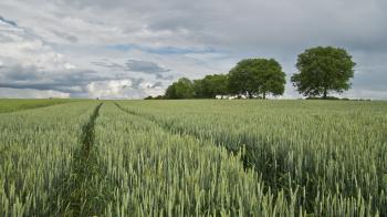Green Field Near Three