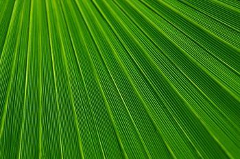 Green Field Texture