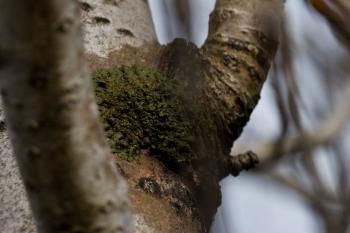 Green fungus on a tree