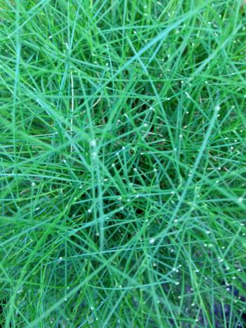 Green grass blades top down