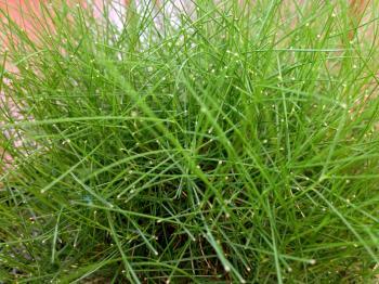 Green grass blades