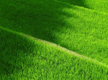 Green Grass during Day Time