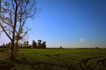 Green Grassland Under Blue Sky