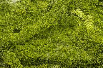 Green Grunge Moss