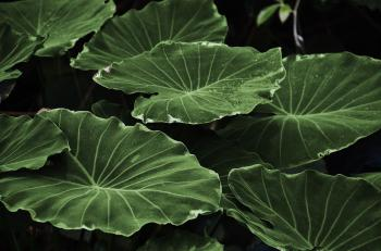 Green Heart Shape Leaf