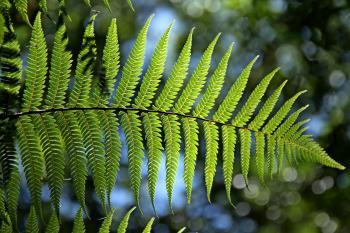 Green Leaf Tree