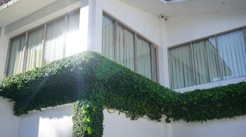 Green Leafed Plant on Balcony during Daytime