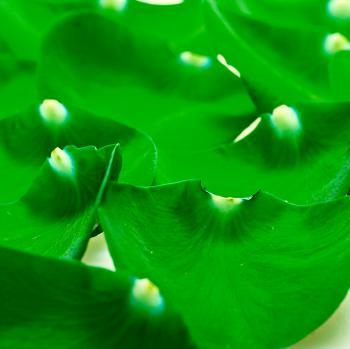 Green petals