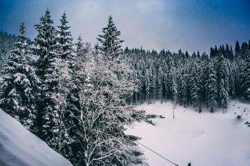 Green Pine Trees Covered With Snow Under Cloudy Blue Sky