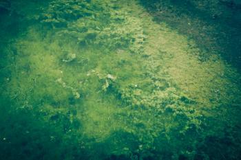 Green Seaweed Texture