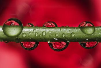 Green Stem With Dew Droplets