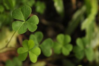 Green three-leaved clovers