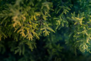 Green Tree Macro Photography