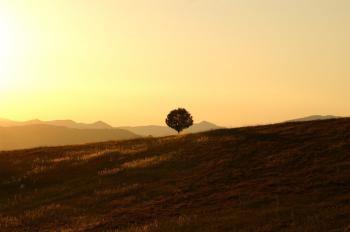 Green Tree on Brown Grass Field