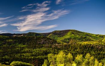 Green Tress and Mountain Under Blue Sky