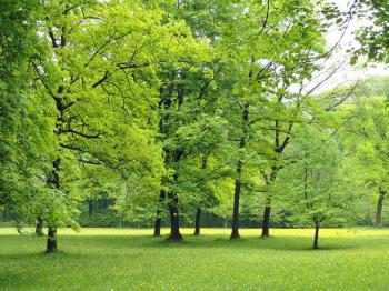 Greenery in Germany