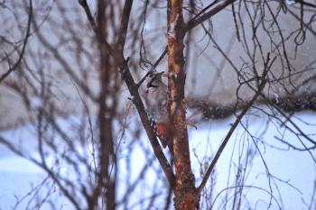 Grey and Orange Bird on a Branch Closeup Photography