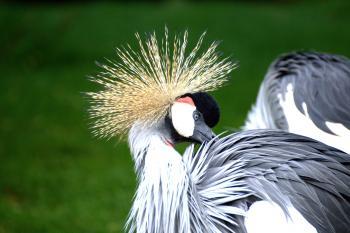 Grey White and Black Bird