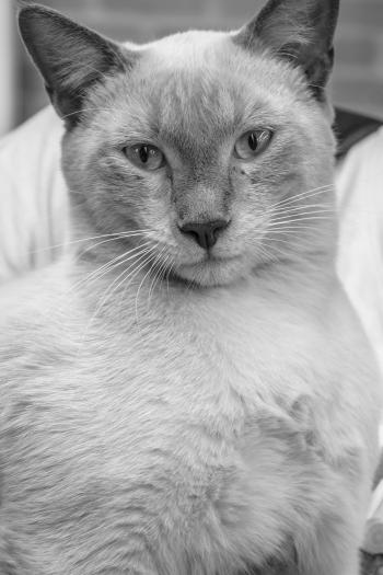 Greyscale Photo of Cat