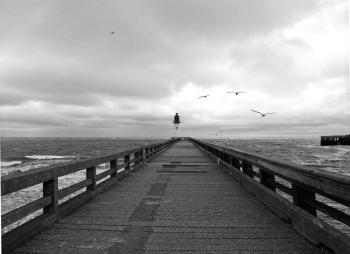 Greyscale Photography of Birds Flying Above Dockway