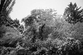 Greyscale Photography of Trees
