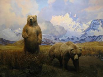 Grizzly bear mountain scene