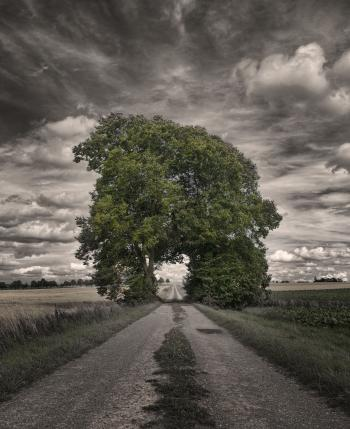Grove of Trees hd wallpaper
