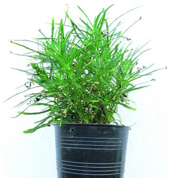 Growing, small plant or seedling