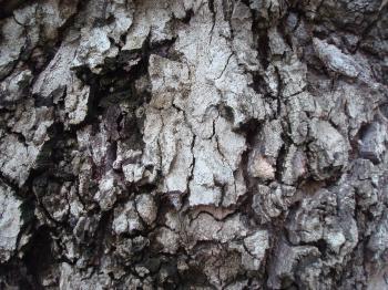 Grunge old bark