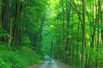 Hagerman Run Road (4)