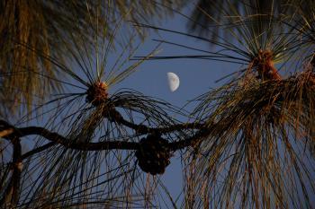 Half Moon at Dusk