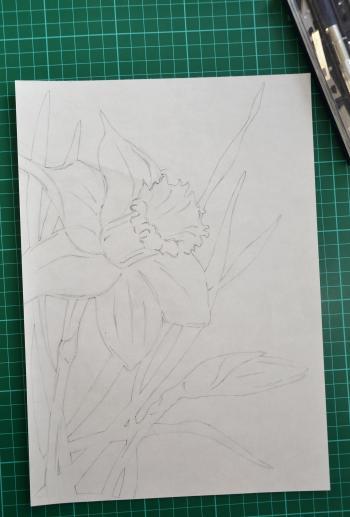 Hand drawn daffodil