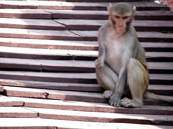 Handicapped Monkey