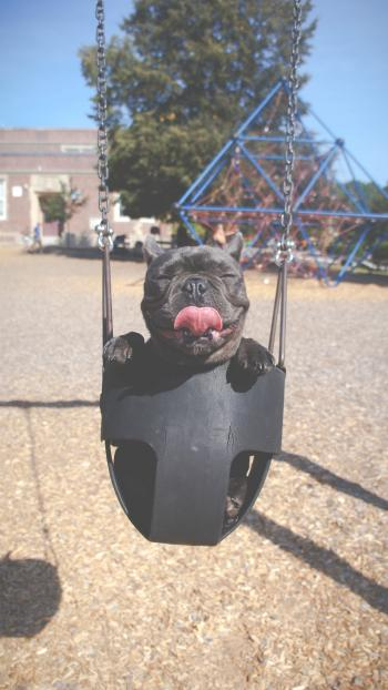 Having a Swing