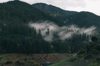 Hazy Forest Landscape