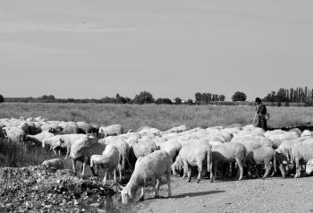 Herd Feeding