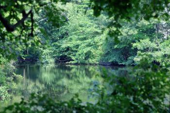 Hidden Pond II