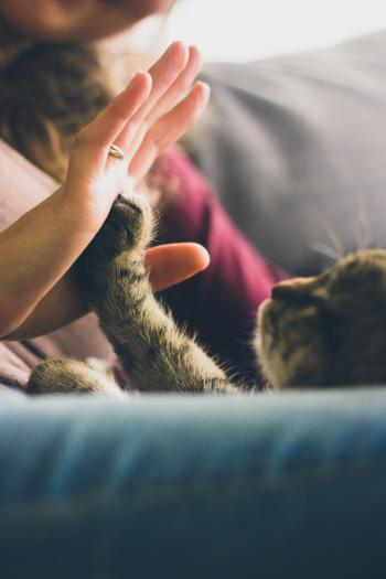 High Five with Cat