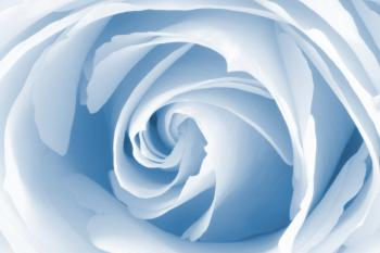 High Key Rose