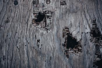 Holed Grunge Wood Texture