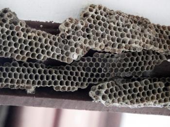 Honeycombe / Bees Nest